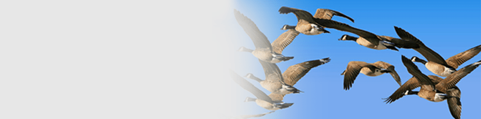bird control and removal service boston and providence