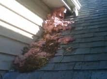 squirrel damage cape cod massachusetts