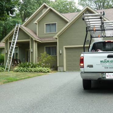 squirrel bats and animal removal weymouth ma